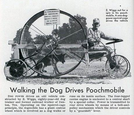 Dog powered vehicle transportation pet